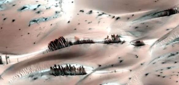 TREES FOUND ON MARS