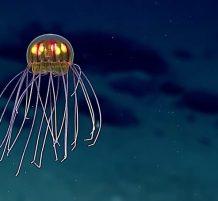 Unusual Jellyfish