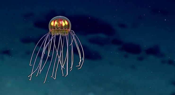 اكتشاف نوع غريب من قناديل البحر أشبه بالكائنات الفضائية