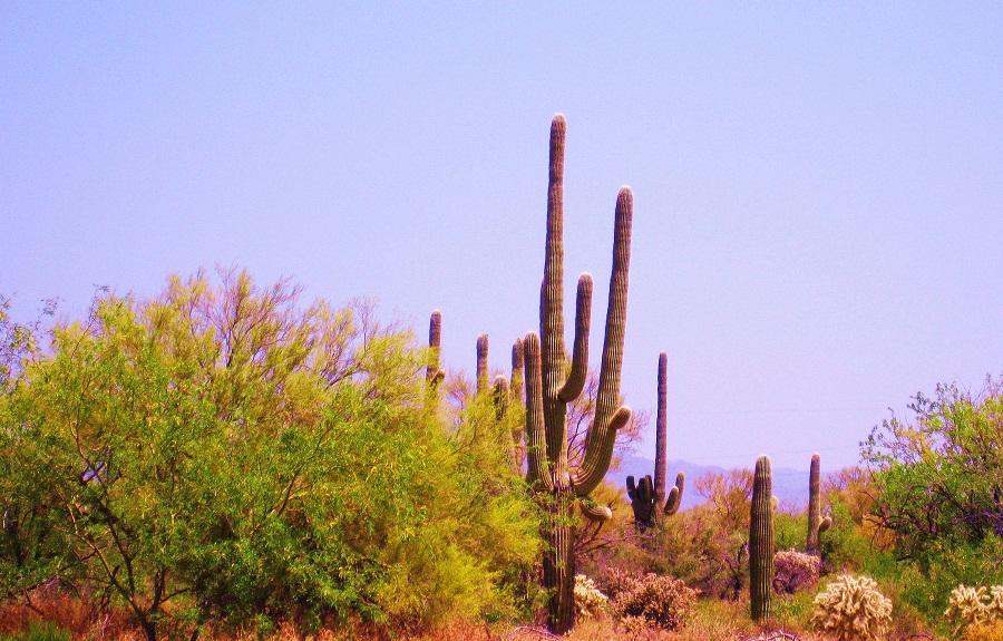 صحراء Tatacoa