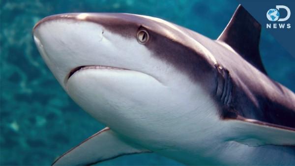 جلد سمكة القرش