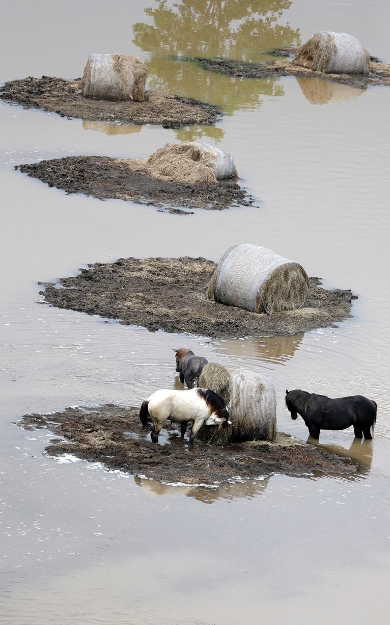 خيول وسط الفيضانات