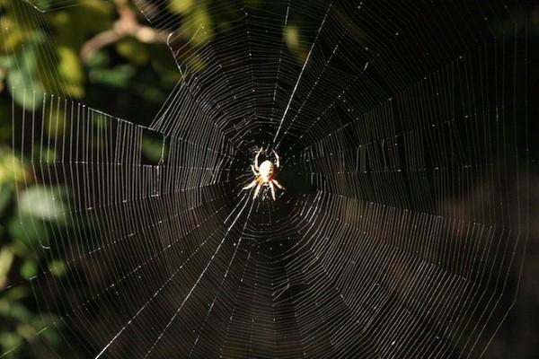 شباك العنكبوت