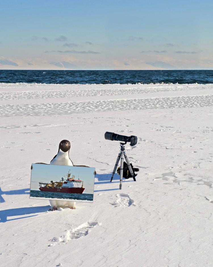 صور فوتوشوب لبطريق