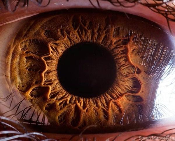 عين الإنسان