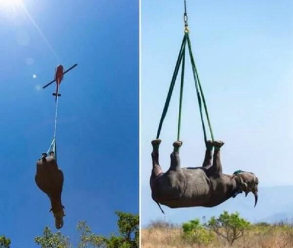 نقل الحيوانات
