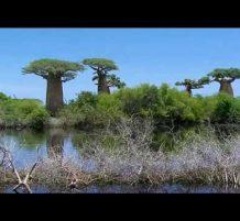 غابات رائعة
