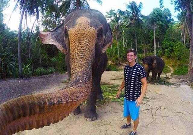 سيلفي الفيل
