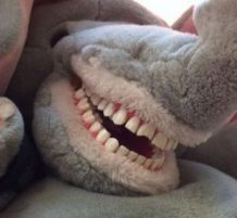 Toothy toys