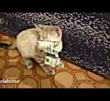 قط يسرق دراهم