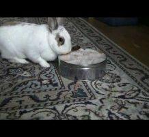 أرنب يسرق الحلويات