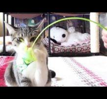قطو يحب يلعب
