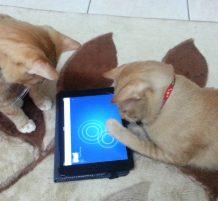 قطط تلعب بالآيباد