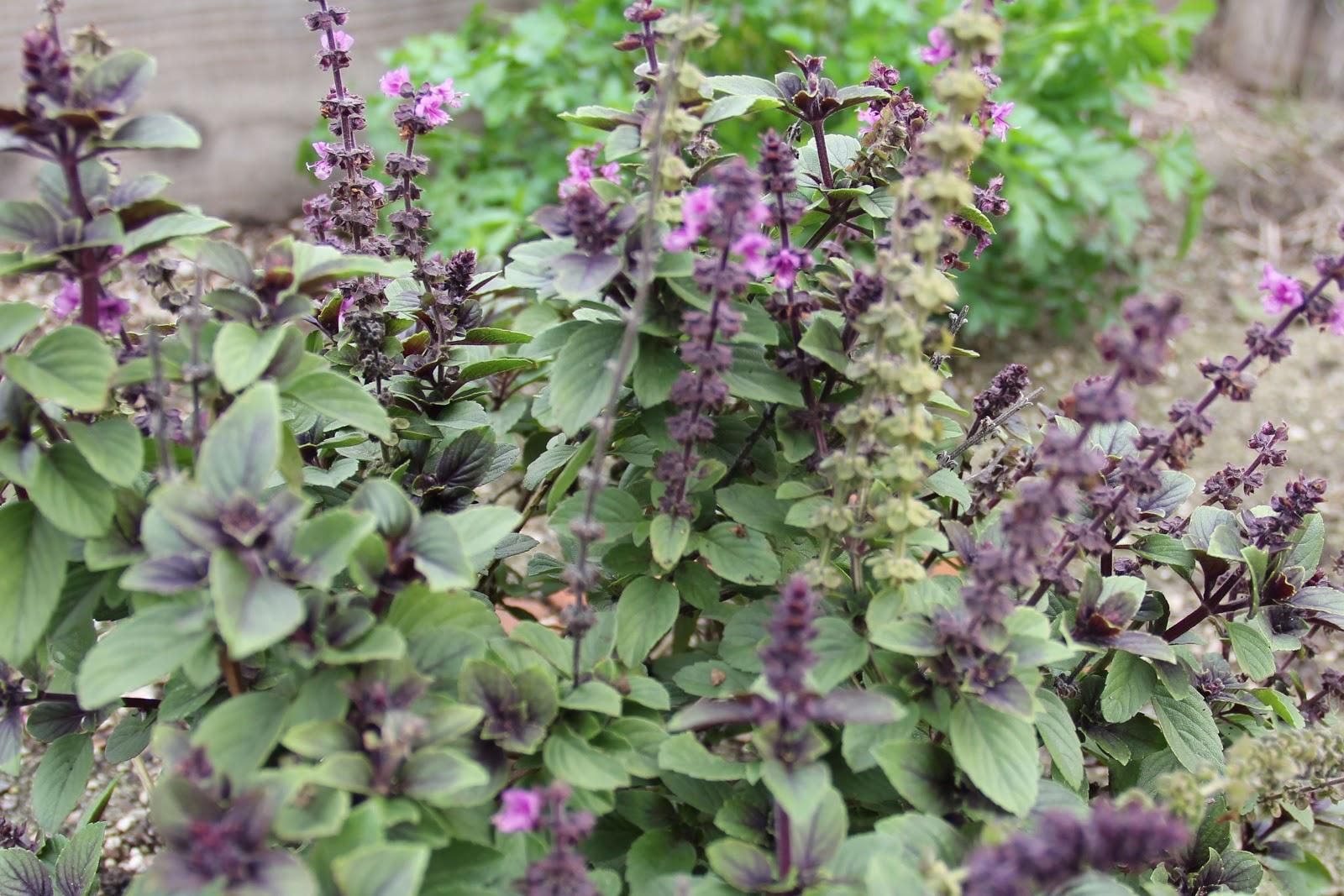 النباتات الطاردة للبعوض