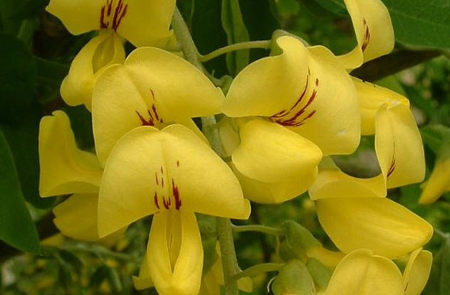 سنعرض أزهار جميلة ولكنها بنفس الوقت قاتلة coobra.net