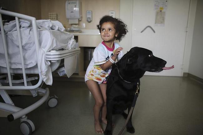 العلاج بالحيوانات