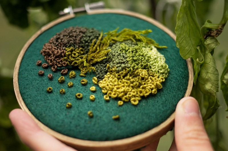 الطحالب على أطواق التطريز