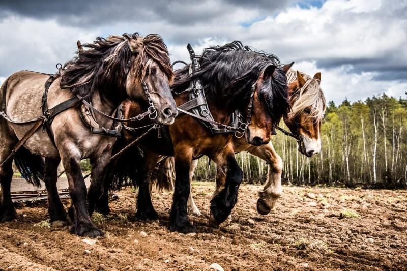 الحصان قياس قوة المحركات
