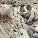 العثور على ذيل ديناصور