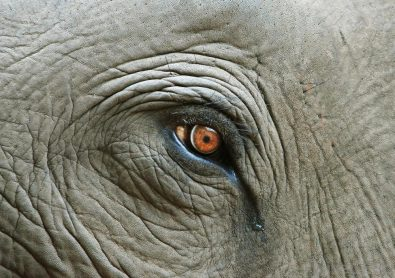 هل تبكي الحيوانات حين تشعر بالحزن؟