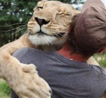 Lions hug