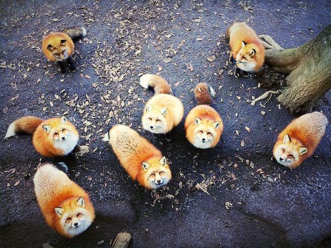 الصورة الفائزة بالمركز الأول لتصنيف الحيوانات.