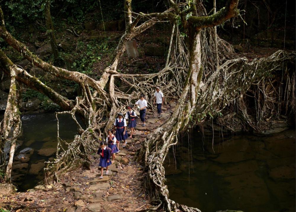 جسر الجذور