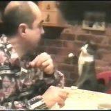 قطة تطلب الأكل بلغة الإشارة