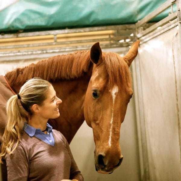 حصانها