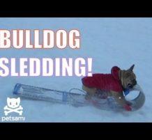 مقطع طريف لكلب يحب التزلج على الثلج !