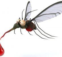 خرافات حول البعوض