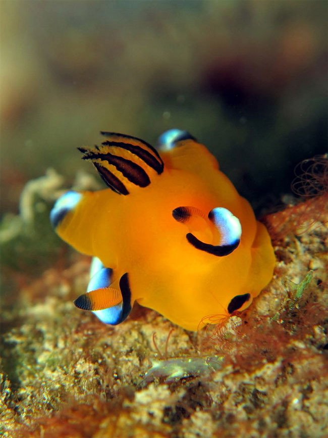 حيوان بحري