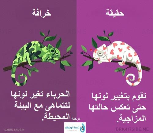الخرافات عن الحيوانات