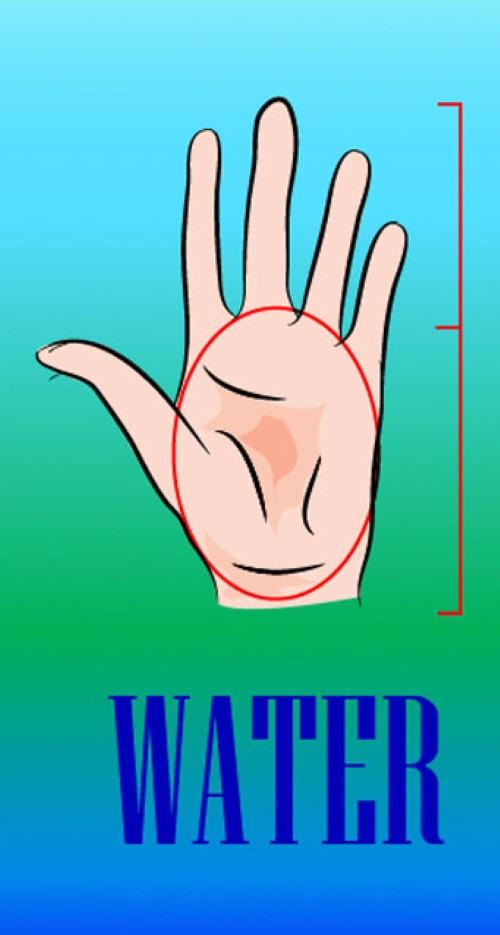 شكل كفة اليد