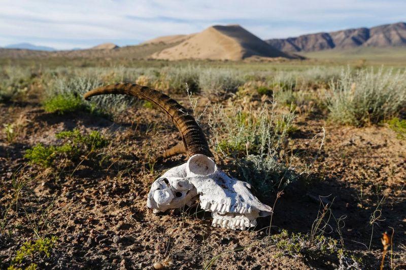 الكثبان الرملية في صحراء كازاخستان