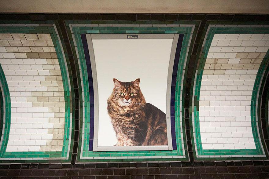 صور قطط في مترو أنفاق