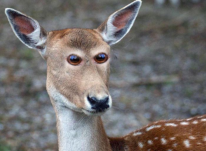 عيون الحيوانات المضحكة