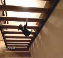 قطة تتسلق الدرج بالمقلوب