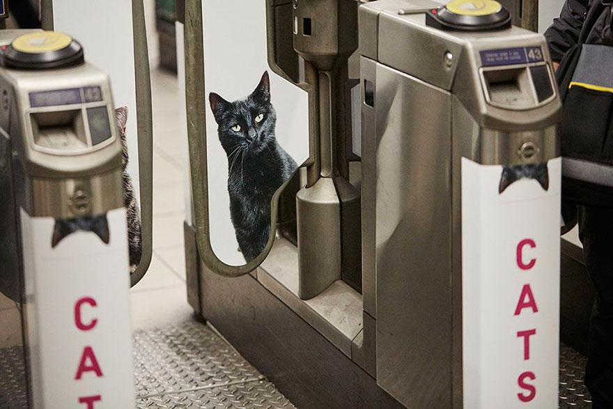 قطط مترو لندن