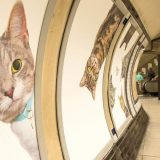 underground station cat pictures