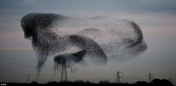 طيران الطيور