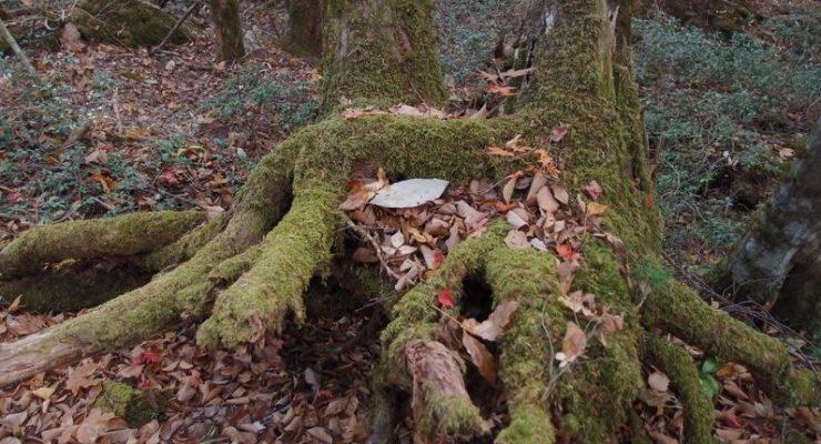 غابة الانتحار .. الوجهة السياحية الأكثر رعباً في اليابان!