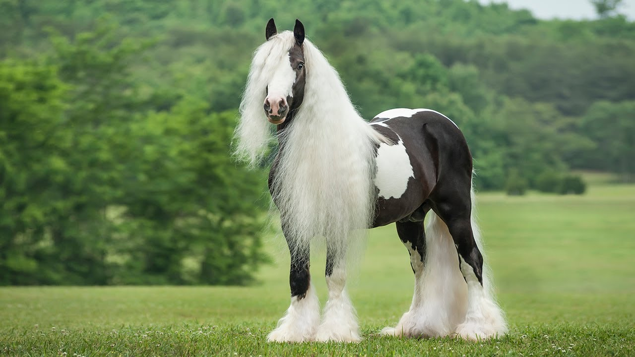 most beautiful horses