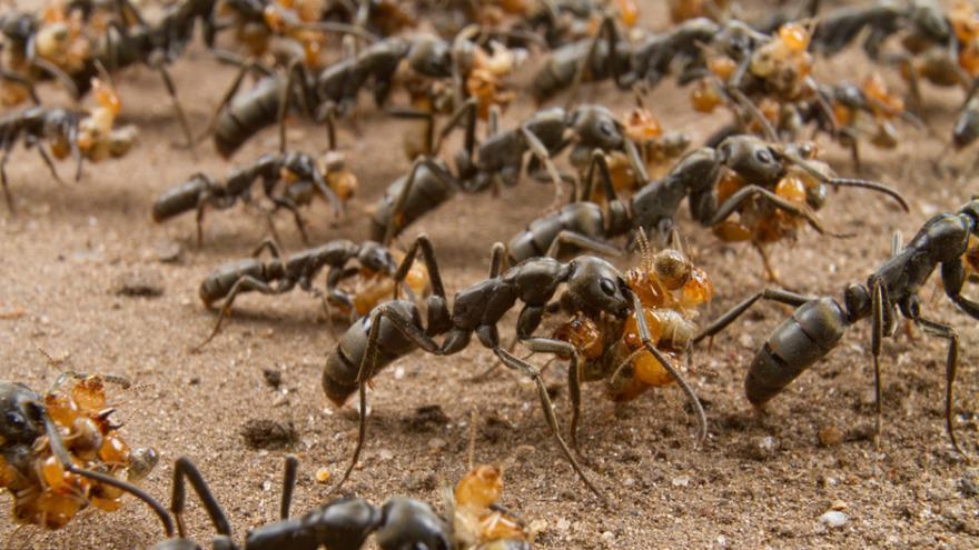 مراحيض النمل