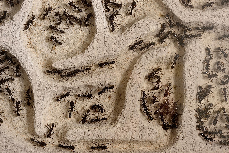 ants toilet