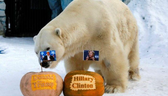 صور حول العالم: حيوانات تتوقع نتيجة الانتخابات الأمريكية والمزيد ..