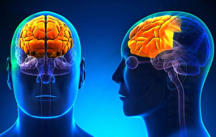 دماغ المرأة والرجل