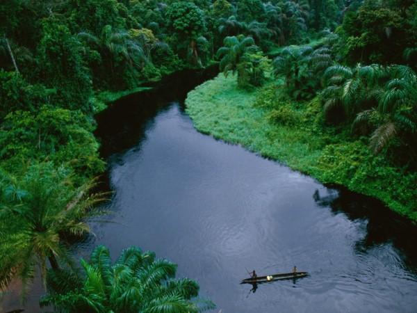 غابات الكونجو