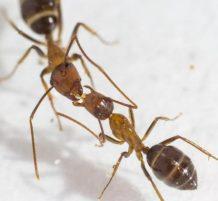 Ants Communicate