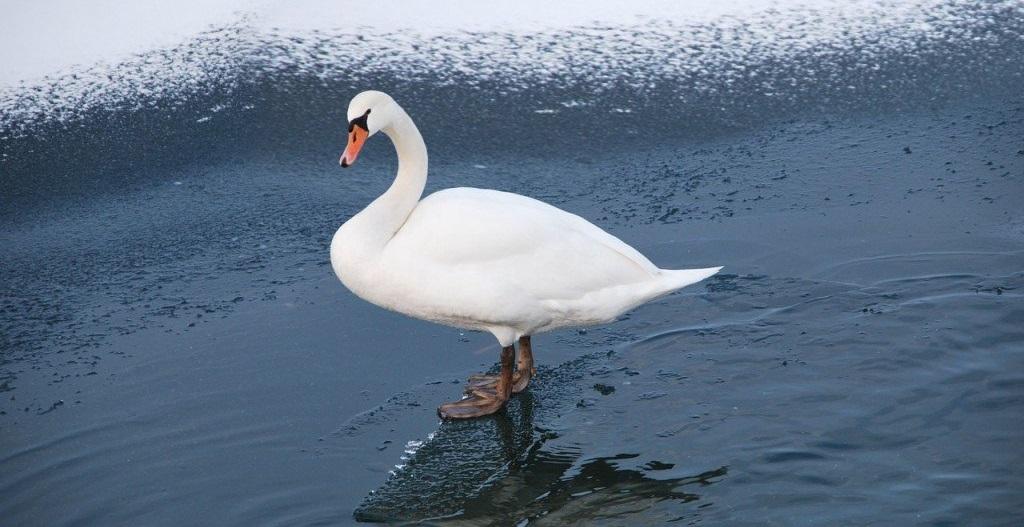 Birds Feet
